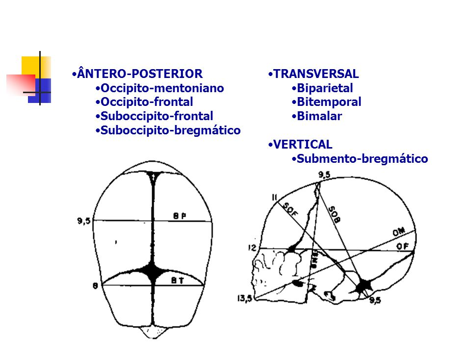 TRANSVERSAL Biparietal. Bitemporal. Bimalar. VERTICAL. Submento-bregmático. ÂNTERO-POSTERIOR. Occipito-mentoniano.