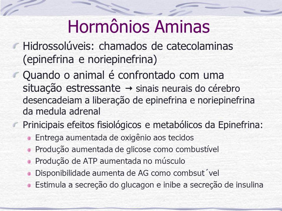 Hormônios Aminas Hidrossolúveis: chamados de catecolaminas (epinefrina e noriepinefrina)