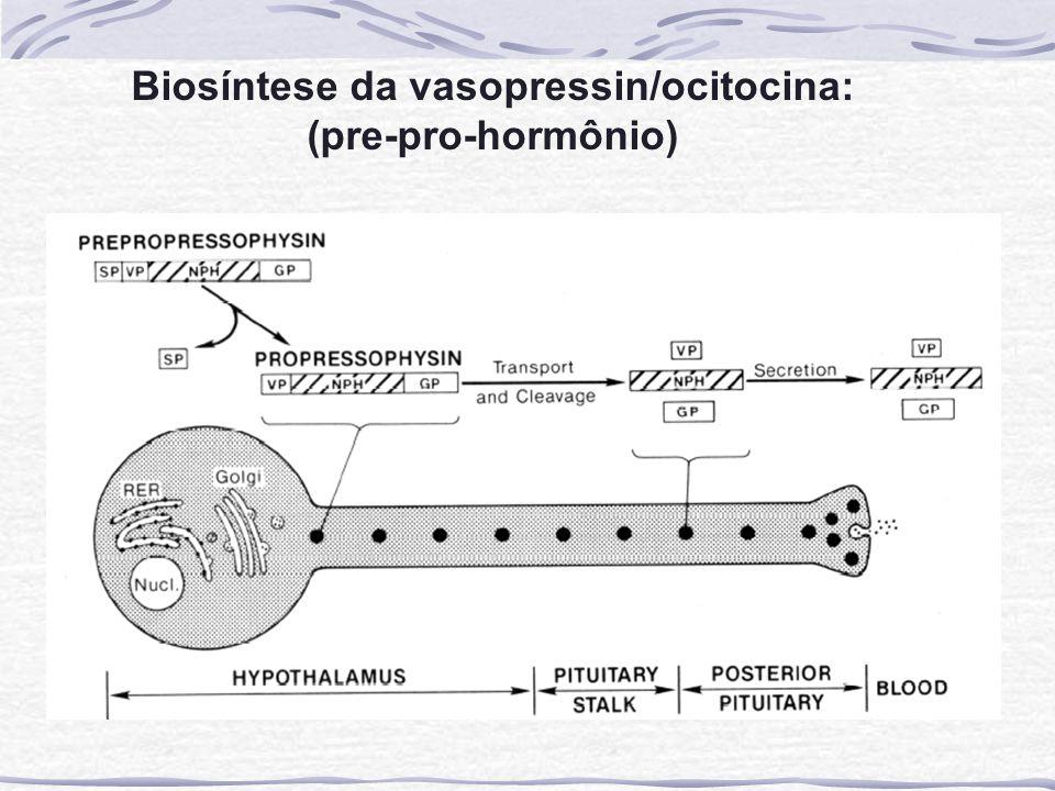 Biosíntese da vasopressin/ocitocina:
