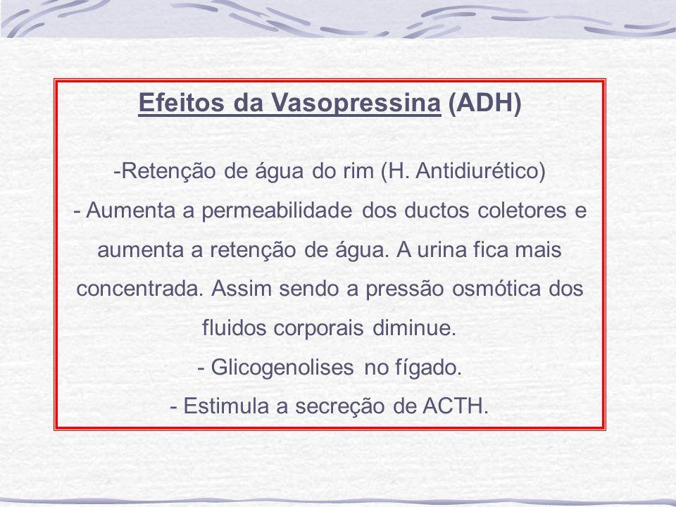Efeitos da Vasopressina (ADH)