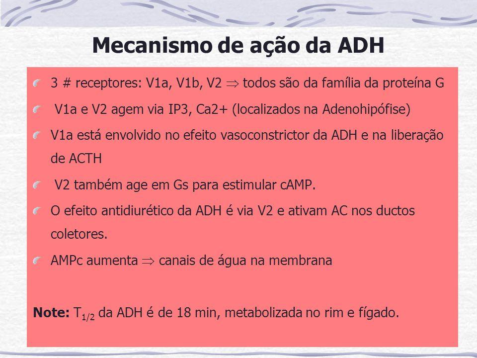 Mecanismo de ação da ADH