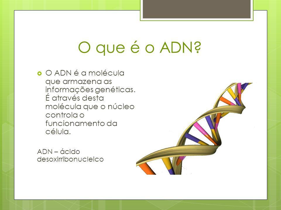O que é o ADN O ADN é a molécula que armazena as informações genéticas. É através desta molécula que o núcleo controla o funcionamento da célula.