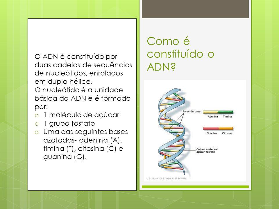 Como é constituído o ADN
