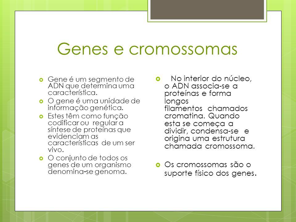 Genes e cromossomas Gene é um segmento de ADN que determina uma característica. O gene é uma unidade de informação genética.