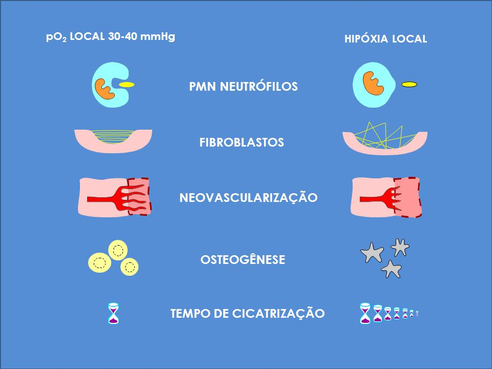 PMN NEUTRÓFILOS FIBROBLASTOS NEOVASCULARIZAÇÃO OSTEOGÊNESE
