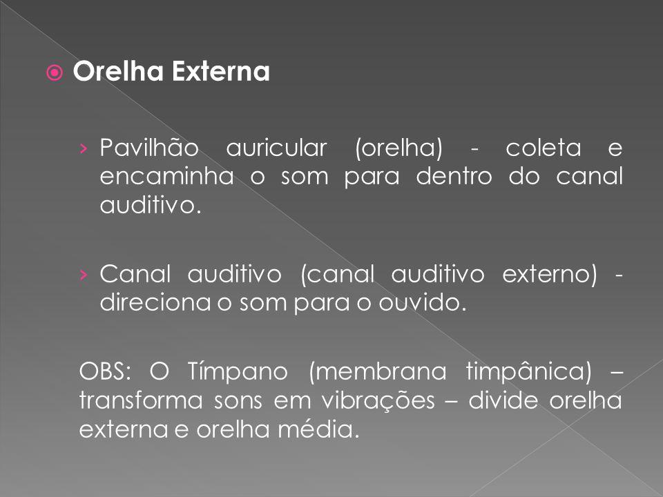 Orelha Externa Pavilhão auricular (orelha) - coleta e encaminha o som para dentro do canal auditivo.