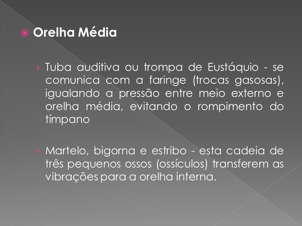 Orelha Média