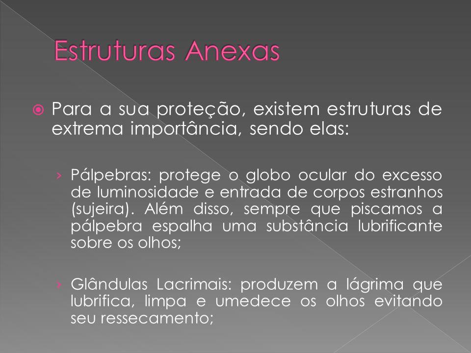Estruturas Anexas Para a sua proteção, existem estruturas de extrema importância, sendo elas: