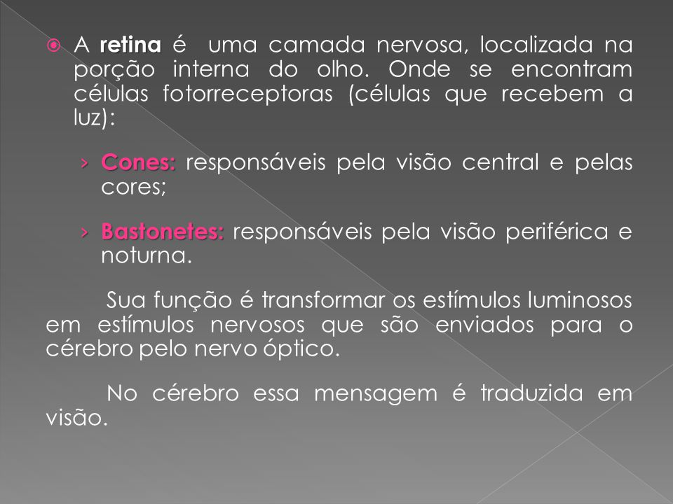 A retina é uma camada nervosa, localizada na porção interna do olho