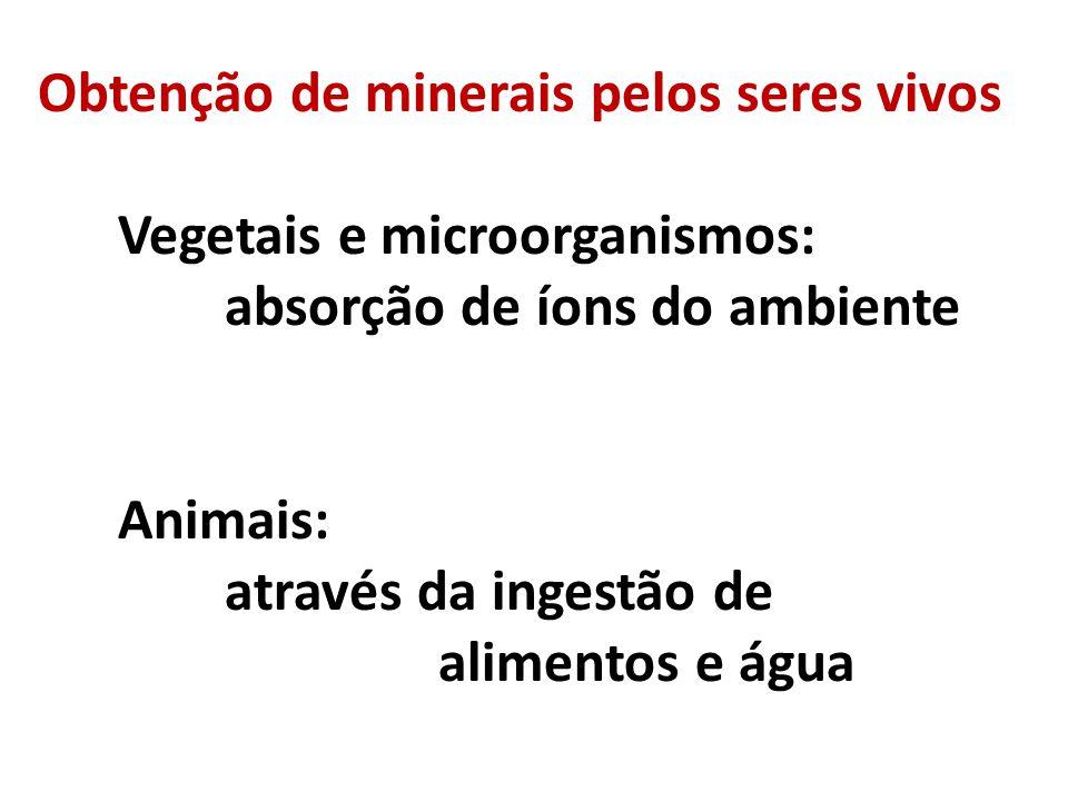 Obtenção de minerais pelos seres vivos