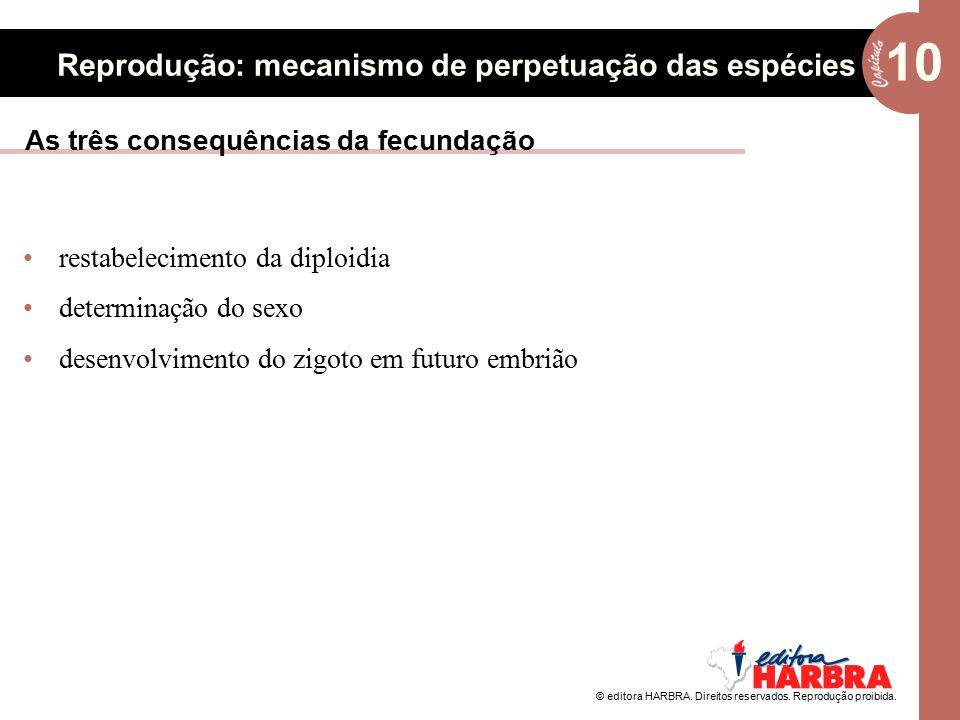 As três consequências da fecundação