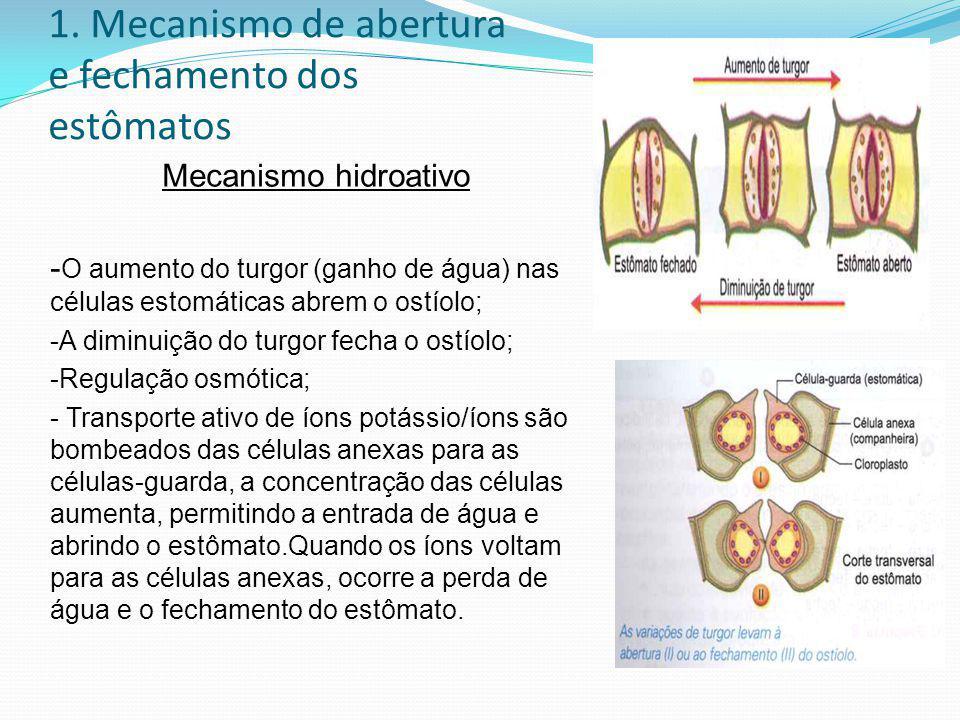 1. Mecanismo de abertura e fechamento dos estômatos