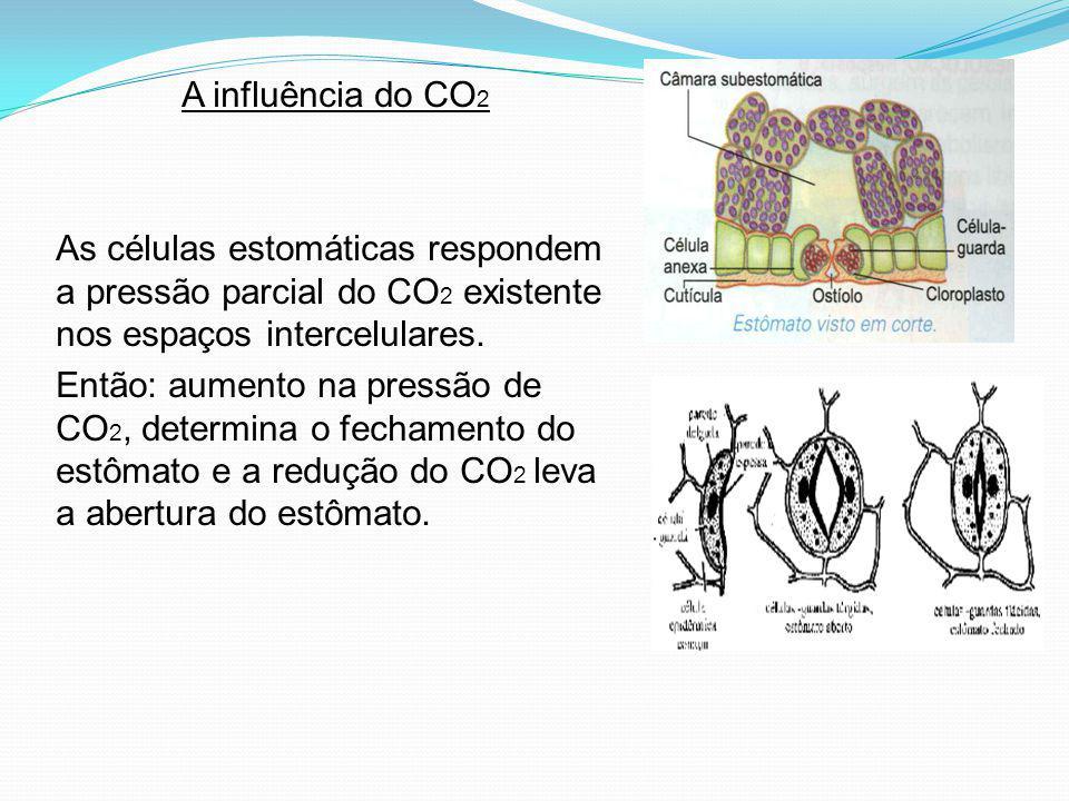 A influência do CO2 As células estomáticas respondem a pressão parcial do CO2 existente nos espaços intercelulares.