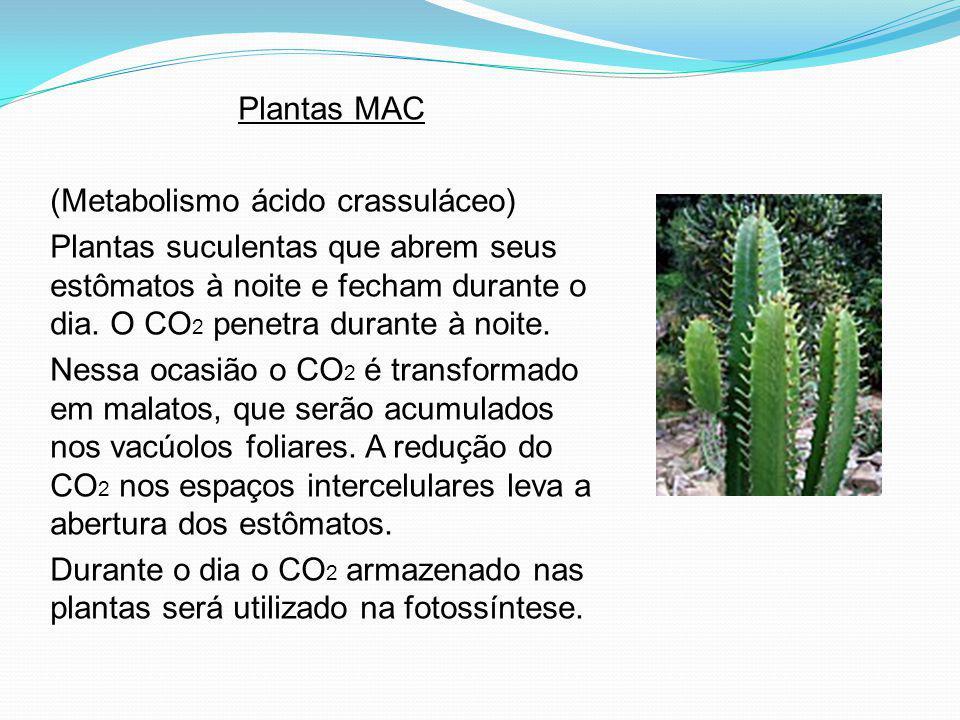 Plantas MAC (Metabolismo ácido crassuláceo)