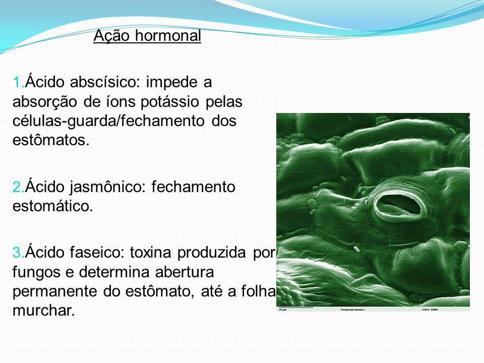 Ação hormonal Ácido abscísico: impede a absorção de íons potássio pelas células-guarda/fechamento dos estômatos.