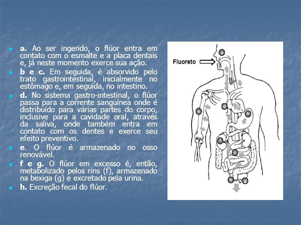 a. Ao ser ingerido, o flúor entra em contato com o esmalte e a placa dentais e, já neste momento exerce sua ação.