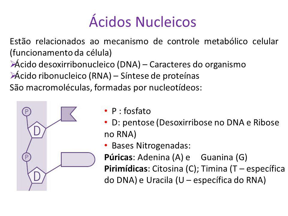 Ácidos Nucleicos Estão relacionados ao mecanismo de controle metabólico celular (funcionamento da célula)