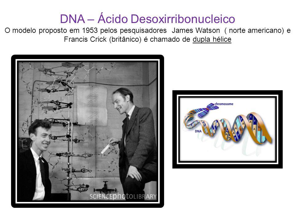 DNA – Ácido Desoxirribonucleico O modelo proposto em 1953 pelos pesquisadores James Watson ( norte americano) e Francis Crick (britânico) é chamado de dupla hélice