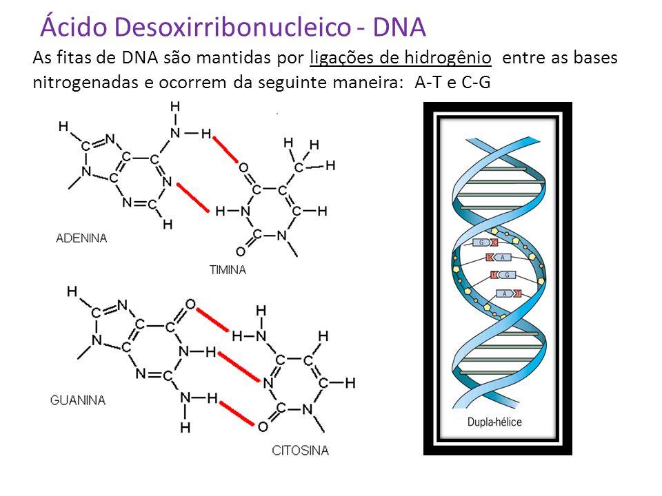 Ácido Desoxirribonucleico - DNA
