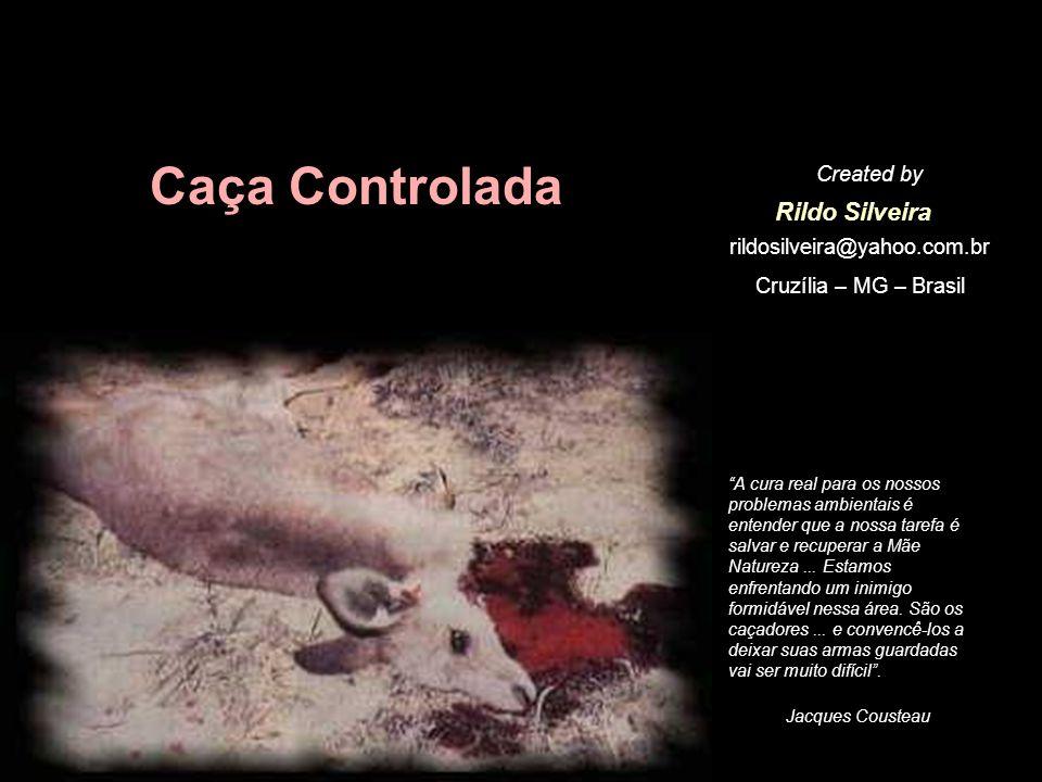 Caça Controlada Rildo Silveira Created by rildosilveira@yahoo.com.br