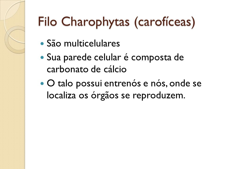 Filo Charophytas (carofíceas)