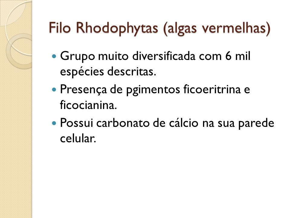 Filo Rhodophytas (algas vermelhas)