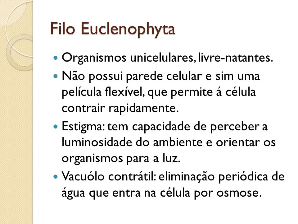 Filo Euclenophyta Organismos unicelulares, livre-natantes.