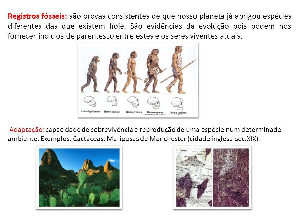 Registros fósseis: são provas consistentes de que nosso planeta já abrigou espécies diferentes das que existem hoje. São evidências da evolução pois podem nos fornecer indícios de parentesco entre estes e os seres viventes atuais.