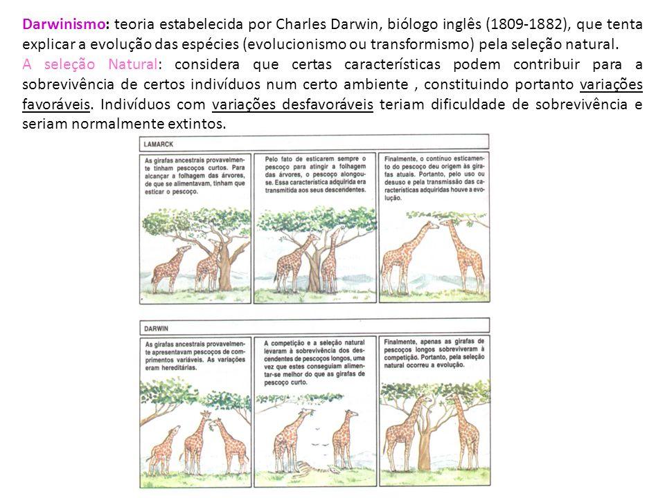 Darwinismo: teoria estabelecida por Charles Darwin, biólogo inglês (1809-1882), que tenta explicar a evolução das espécies (evolucionismo ou transformismo) pela seleção natural.