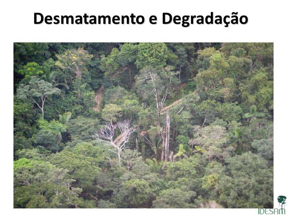 Desmatamento e Degradação