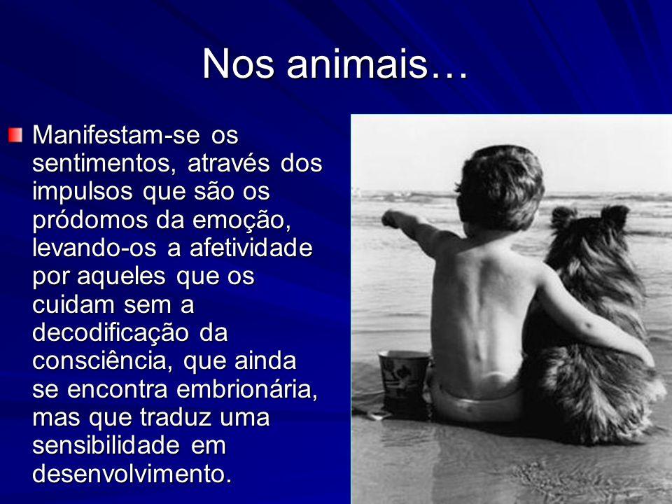 Nos animais…