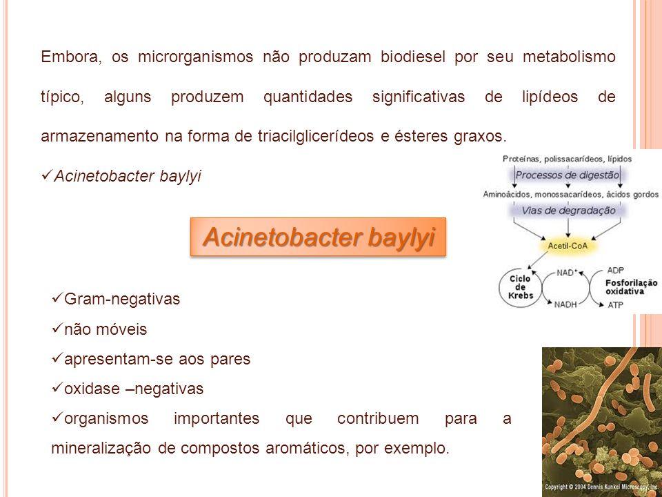 Embora, os microrganismos não produzam biodiesel por seu metabolismo típico, alguns produzem quantidades significativas de lipídeos de armazenamento na forma de triacilglicerídeos e ésteres graxos.