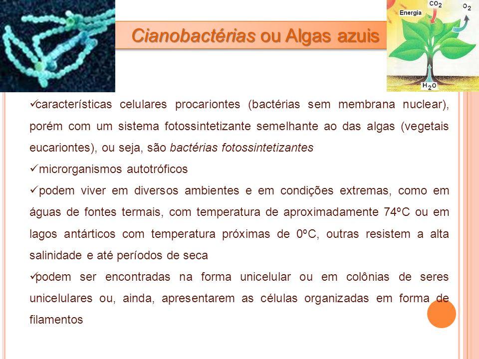 Cianobactérias ou Algas azuis