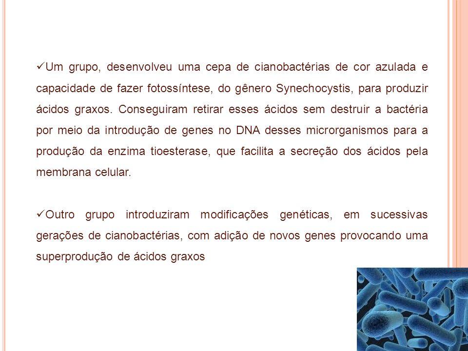 Um grupo, desenvolveu uma cepa de cianobactérias de cor azulada e capacidade de fazer fotossíntese, do gênero Synechocystis, para produzir ácidos graxos. Conseguiram retirar esses ácidos sem destruir a bactéria por meio da introdução de genes no DNA desses microrganismos para a produção da enzima tioesterase, que facilita a secreção dos ácidos pela membrana celular.