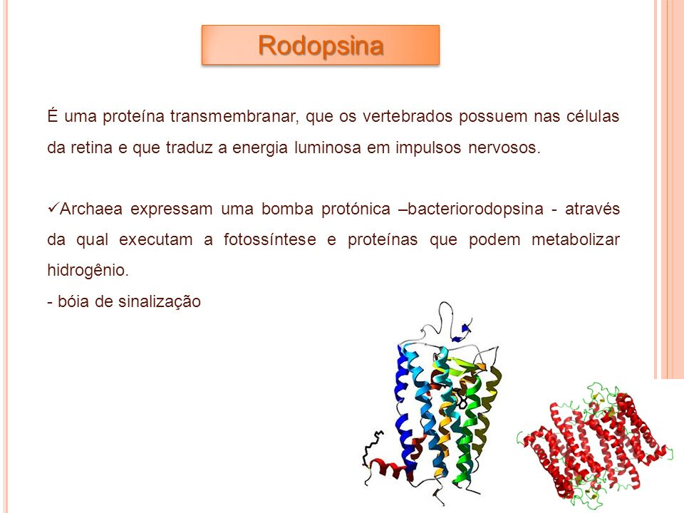Rodopsina É uma proteína transmembranar, que os vertebrados possuem nas células da retina e que traduz a energia luminosa em impulsos nervosos.