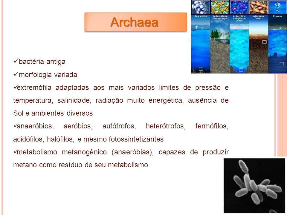 Archaea bactéria antiga morfologia variada