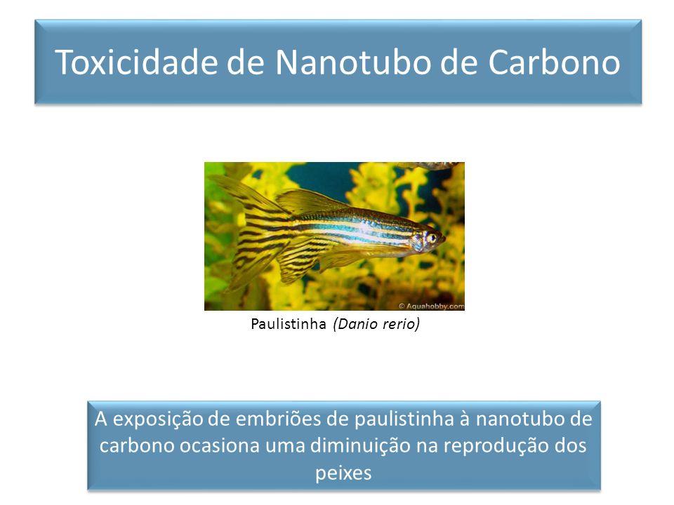 Toxicidade de Nanotubo de Carbono