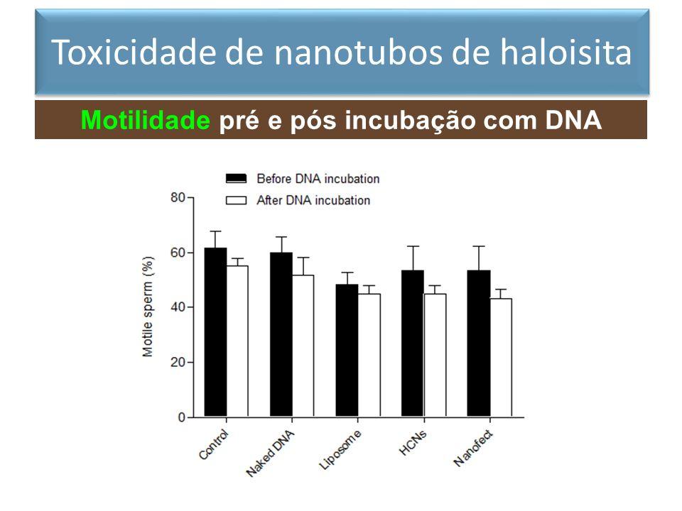 Motilidade pré e pós incubação com DNA exógeno