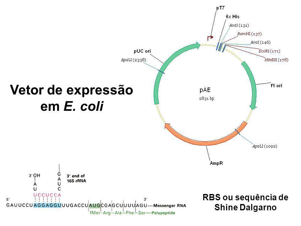 Vetor de expressão em E. coli RBS ou sequência de Shine Dalgarno