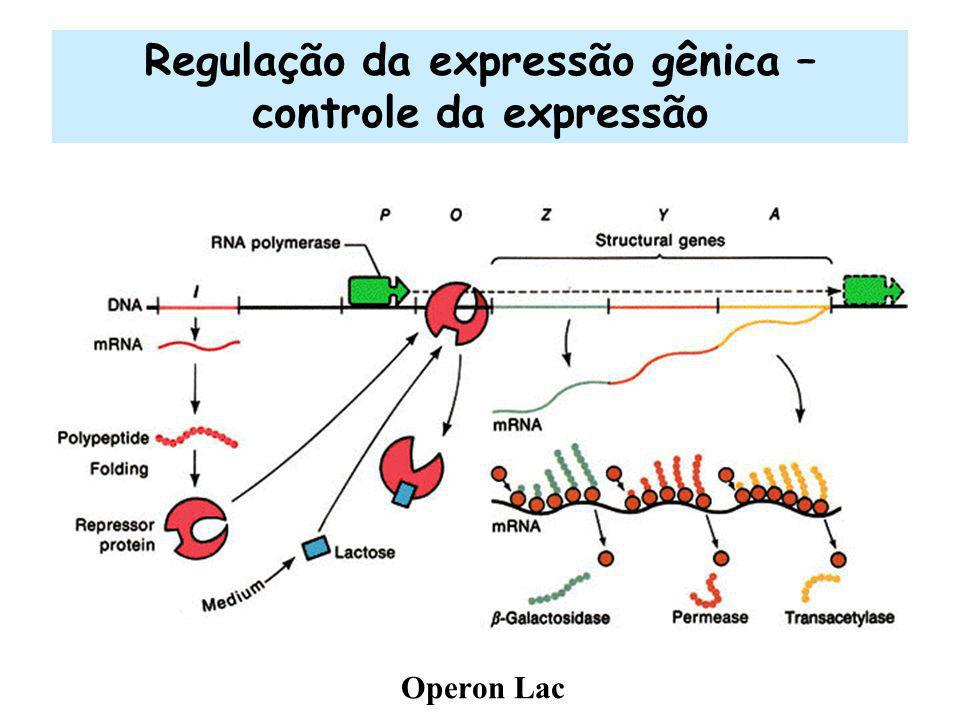 Regulação da expressão gênica – controle da expressão