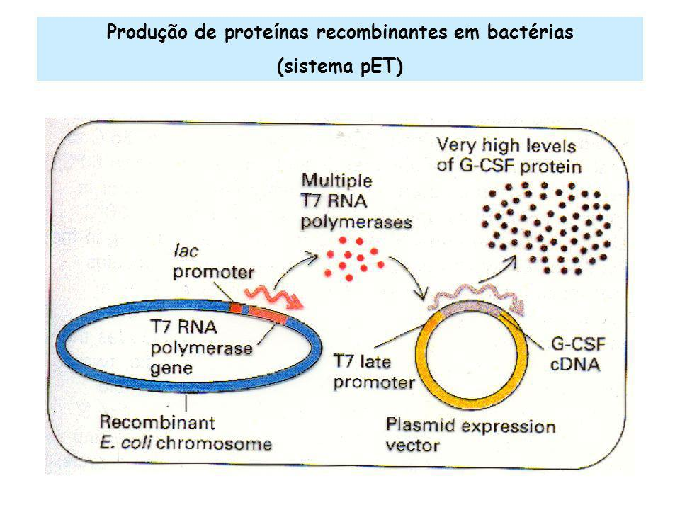 Produção de proteínas recombinantes em bactérias