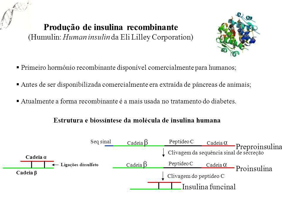Produção de insulina recombinante