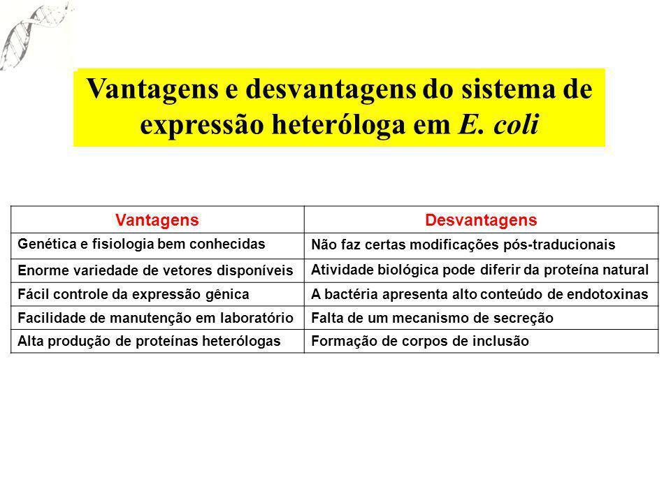 Vantagens e desvantagens do sistema de expressão heteróloga em E. coli