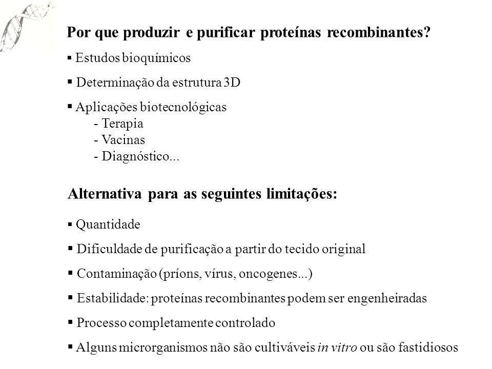 Por que produzir e purificar proteínas recombinantes