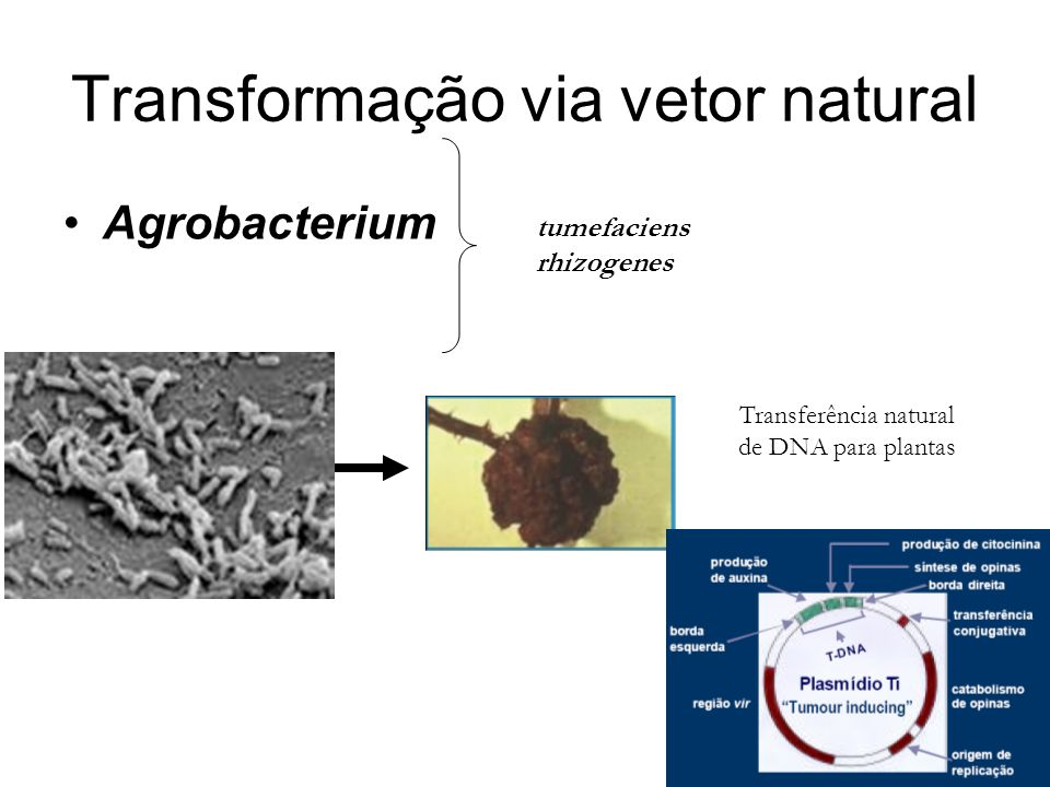 Transformação via vetor natural
