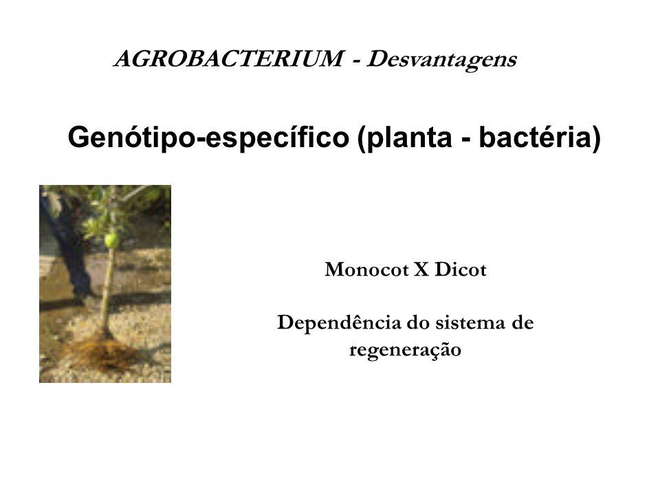 AGROBACTERIUM - Desvantagens Dependência do sistema de regeneração