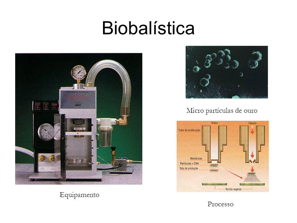 Biobalística Micro partículas de ouro Equipamento Processo