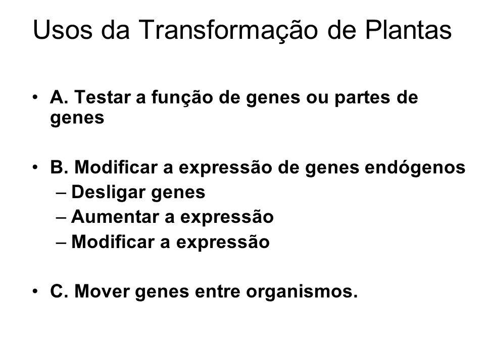 Usos da Transformação de Plantas