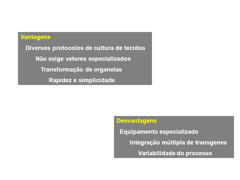 Vantagens Diversos protocolos de cultura de tecidos. Não exige vetores especializados. Transformação de organelas.