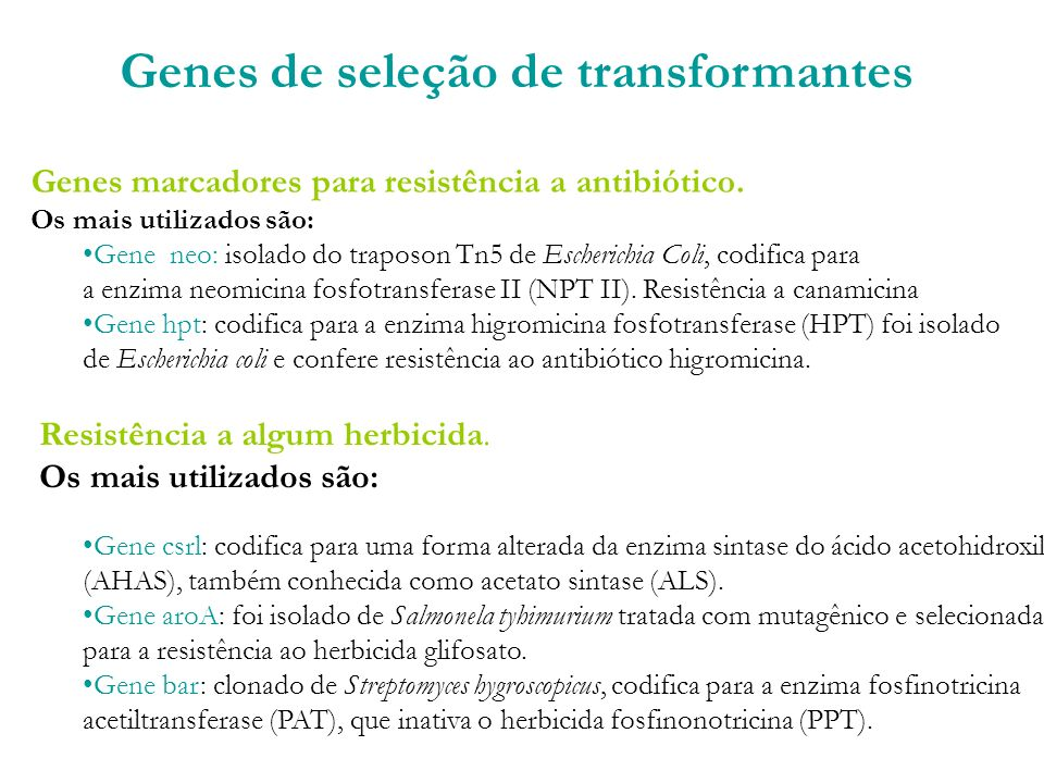 Genes de seleção de transformantes
